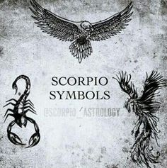 SCORPIO is the only Zodiac Sign with 3 Symbols. The Eagle, The Scorpion and the Phoenix. Scorpio Symbol, Scorpio Art, Scorpio Traits, Scorpio Zodiac Facts, Scorpio Love, Scorpio Woman, Zodiac Symbols, Scorpio Quotes, Scorpio Images