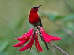 Bird Sanctuaries in Uttarakhand, India @ Sanctuariesindia.com