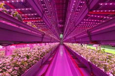 With a cornucopia of new ag startups, from rooftop greenhouses to high-tech vertical farms, the city's growing agriculture movement is looking to...
