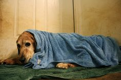 Baby it's cold outside!  Protect your pet from hypothermia!  It can happen fast!
