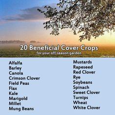 20 benificial cover crops