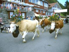 Murren Tourism: Best of Murren, Switzerland - TripAdvisor