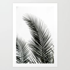 Palm Leaves Art Print by Mareike Böhmer Photography - $20.00