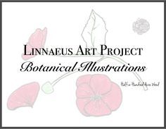 linnaeus-art-project
