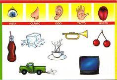 ♥ Everything for children: duyu organları