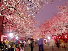 "When is the best day to see cherry blossom in Japan? Well, it depends on the area. See below for more information.  Enjoy your ""Ohanami""  ;)   2016 According to the announcement of…"