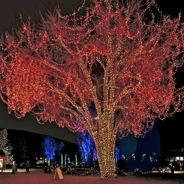 """A Hudson Christmas Holiday Lights Show """"It's beginning to look at lot like Christmas!!"""" New surprises await as The Hudson Gardens & Event Center unveils A Hudson Christmas, an exciting, new walkthrough holiday light display heralding the wonder of the Christmas season. Friday, Nov 30 5-8:30pm"""