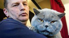 İngiltere Dışişleri Bakanlığı, Londra'daki binasında 'farelere savaş açması' için Palmerston isimli kediyi kadrosuna dahil etti. Detaylar ajanimo.com'da.. #ajanimo #ajanbrian #kedi #cat #animal #hayvan
