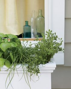 Go With a Theme  Window boxes offer numerous design possibilities. Combine your most frequently used herbs, or put together some thematic plantings, such as Asian herbs (including garlic chives, Thai basil, lemongrass, and shiso) and tea herbs (mint, chamomile, lemon balm, and lemon verbena); or Italian herbs (rosemary, basil, oregano, and chives), left. Other good mixes include edible flowers (nasturtiums, borage, calendula, fennel, and violets) and salad greens (lettuce, arugula, and dill)...