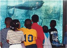 Best Things to Do with Your Kids in Cleveland: Greater Cleveland Aquarium
