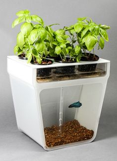 Affordable Home Aquaponics Garden - just get a light bar over the top and this would be perfect!