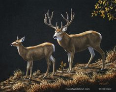 Oil painting of mule deer by wildlife artist Crista Forest. ForestWildlifeArt.com - Fine Art Prints starting at just $25. Notecards also available. Get them here: http://fineartamerica.com/profiles/crista-forest.html