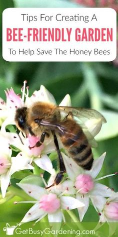 (AD) Honey bees play a key role in producing much of the food we eat every day. Bee population decline is on the rise, and honey bees need our help to survive. Learn how you can help save the bees by making simply changes to your garden!
