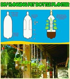 Plants in recycled plastic bottles...cut out sides,Wah..Lah..hanging planter!
