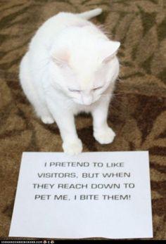 BEST OF CAT SHAMING!!! LOL!
