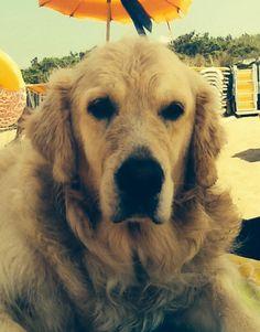 Joy in spiaggia!!!