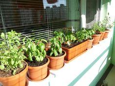 Autor: Mon252 Plants, Author, Plant, Planets