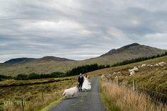 Bride and groom in the mountains of Donegal on their wedding day being greeted a stray sheep. The had their wedding reception in Harvey's Point Country hotel on the shore of Lough Eske, just beside the 5 star Lough Eske Castle. Photo by paul McGinty from Ghorm Studio Photography, an award winning creative storytelling photographer.