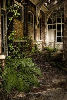 I love how nature Beautifies it! Abandoned: Lillesden School for Girls, Kent, South East, England