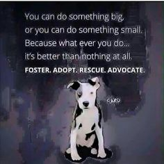 You can do something big, or you can do something small. Because whatever you do... it's better than nothing at all. Foster. Adopt. Rescue. Advocate. #adoptdontshop