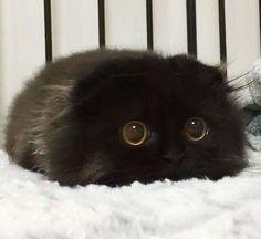 Cutest kitten ever - find unique cat t-shirts at www.FantasyArtDreams.com