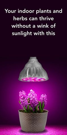 In case your houseplants do not get enough sunlight, this is like growing magic! Inside Garden, Inside Plants, Garden Plants, Indoor Plants, Plantas Bonsai, Grow Lamps, Gadgets, Plant Lighting, Herbs Indoors