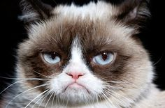 I don't know why the sight of this cat just makes me crack up. No matter how many times I see it.