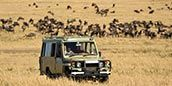 Experience a game drive in the Serengeti, Tanzania