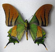colorful butterflies - Google zoeken