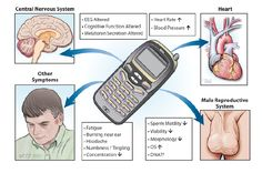 Cell Phones Transmit Radiation That Impact Your Health Tesla Technology, Radiation Exposure, Causes Of Infertility, Nuclear Medicine, Precision Nutrition, Reproductive System, Central Nervous System, Oxidative Stress, Alternative Energy
