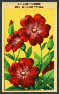 seed label