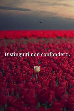 Esattamente! Italian Quotes, Tumblr, Foto Instagram, Bff Quotes, Life Inspiration, Quotations, Motto, Inspirational Quotes, Wisdom