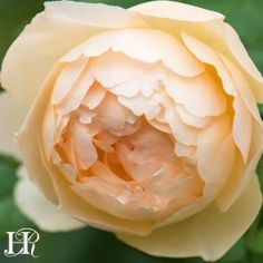 Wollerton Old Hall: most fragrant