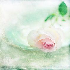 A Rose To Fall by AlicjaRodzik