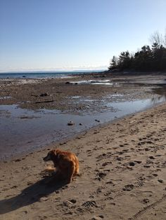 April 2013 - Cawaja Beach, Tiny, Georgian Bay - last summer the water level at this beach was up to about where the dog is sitting. Sand And Water, Pink Fashion, Georgian, Vintage Pink, Canada, Beach, Dogs, Summer, Animals