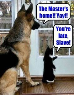You're late slave! Cats are mean, selfish, aloof, poop in the house and make you clean it up, scratchy, hairbally evil little demons.  Except kittens they're cute. They get possessed on their first birthday.
