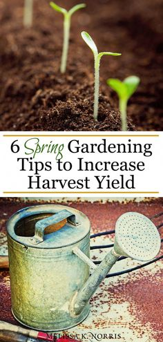 Beginner Gardening Spring gardening tips to increase harvest yield for an epic garden year Spring Plants, Spring Garden, Organic Vegetables, Growing Vegetables, Gardening Vegetables, Container Gardening, Growing Tomatoes, Garden Wallpaper, Organic Insecticide