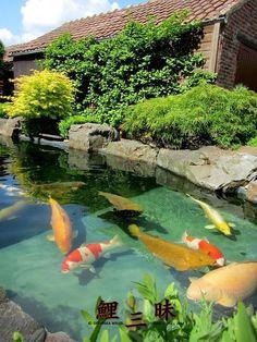 Fearless aquaponics design look at this website Koi Pond Design, Landscape Design, Garden Design, Goldfish Pond, Pond Water Features, Pond Waterfall, Koi Carp, Fish Ponds, Ponds Backyard