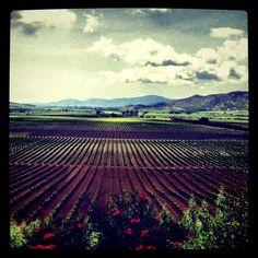 Valle de Guadalype donde lis mejores vinos de Mexica se encuentran. Ensenada, Baja California, Mexico.