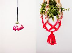 Love this ombre macrame plant holder on so many levels...