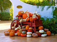 Fall's fall Pumpkin, Vegetables, Halloween, Fall, Photography, Autumn, Pumpkins, Photograph, Fall Season