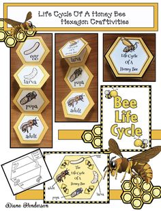 Bee Activities: Life Cycle Of A Honey Bee Hexagon Craft & Activities Hexagon shaped activities, beek Bees For Kids, Bee Crafts For Kids, Honey Bee Life Cycle, Bee Activities, Sequencing Activities, Crown Crafts, Bee Art, Bugs And Insects, Mason Jar Crafts