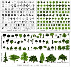 Architectural Trees Png architectural trees png tr02 tree collection bundle png ...