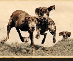 Portrait of A Pet Photography Artist & Who's On Canine Camera ... #pets #animals ... PetsLady.com | via @roncallari