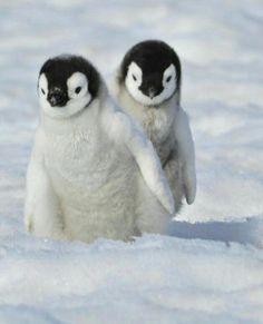 Penguin Day, Penguin Craft, Baby Animals, Cute Animals, Animal Babies, Wild Animals, Friends Day, Baby Penguins, Travel Humor