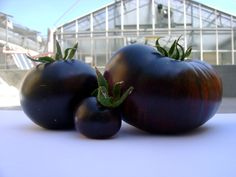 SunBlack has a high content of anthocyanins, substances with a recognised strong anti-oxidant power that are usually found in black grapes, blueberries, strawberries and cherries but common varieties of tomatoes are not known to contain significant quantities of them.