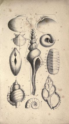 Lessons on shells, -