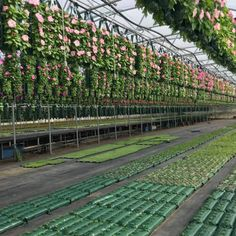 Al's Flower Pouch is a WIN-WIN: Optimize unused greenhouse space and offer a niche vertical planter. Solutions for vertical gardening have never been more attractive. A new online resource is helping growers think beyond the hanging basket. Check out our new website: alsflowerpouch.com #alsflowerpouch #afp #websitelaunch #newwebsite #website #site #amahort #amasolutions #verticalgarden #verticalgardening #gardenideas #gardeninspiration #wallbag #flowerbag #plants #greenthumb