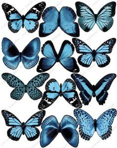 Cakeshop 12 x PRE-CUT Light Blue Edible Butterfly Cake Toppers - Premium Wafer Paper: Amazon.co.uk: Kitchen & Home