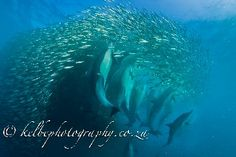 Shark diving Safaris in South Africa and Mozambique, visits to Game Parks and introduction to Zulu culture Shark Diving, Sea Creatures, Safari, Places To Visit, Africa, Waves, Animals, Outdoor, Outdoors
